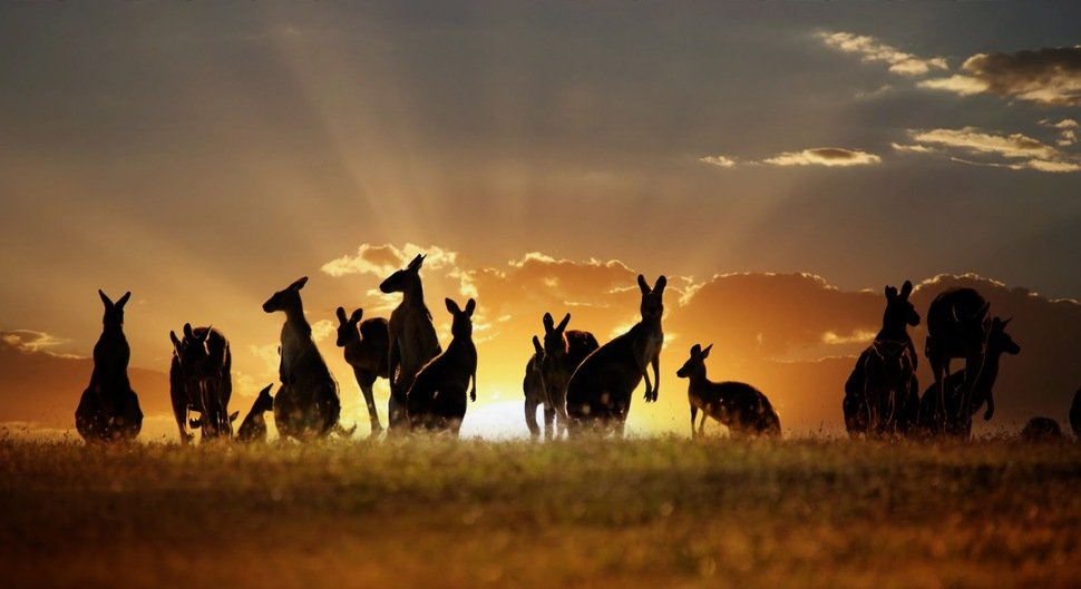 За что могут арестовать в Австралии?