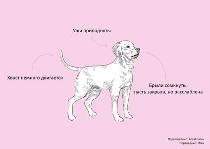 как собаки читают наши мысли, язык