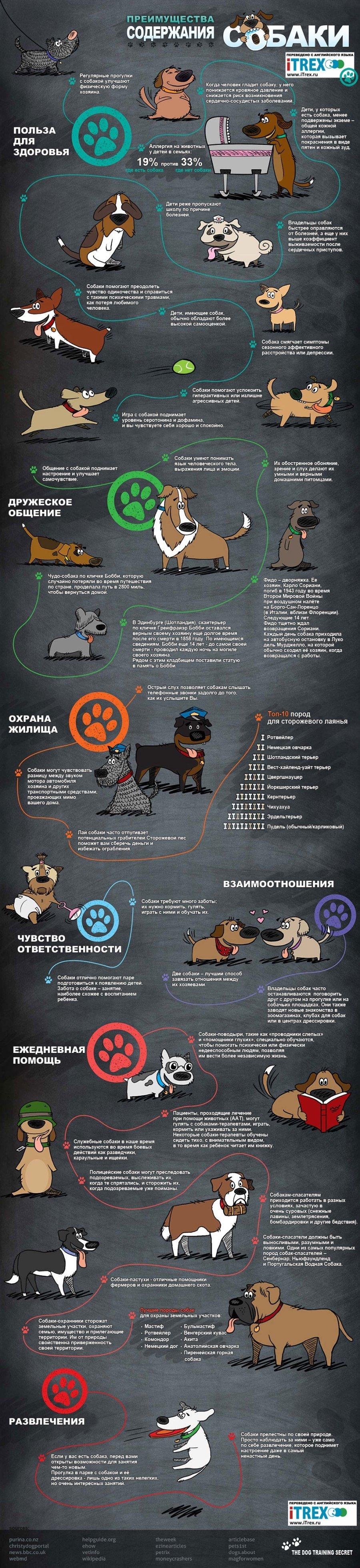 Бюро переводов iTrex. Инфографика: преимущества содержания собаки