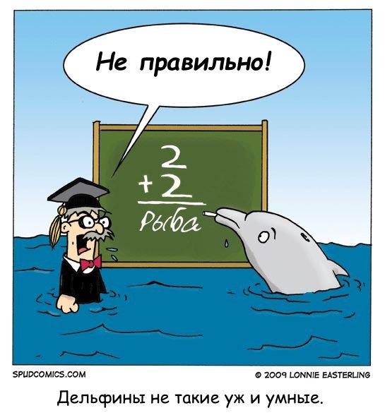 шведский стартап начал работать над переводом речи дельфинов