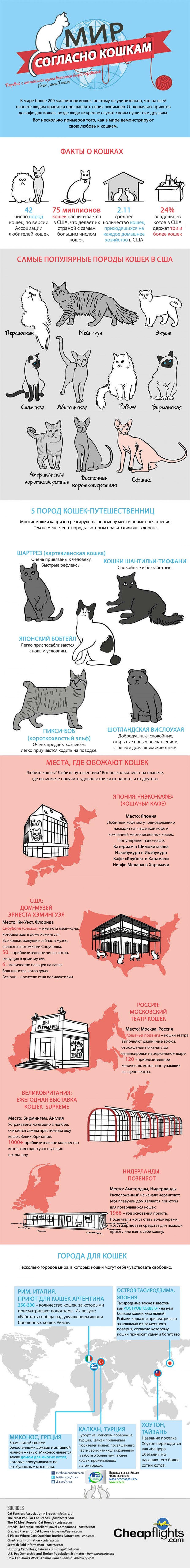 Мир согласно кошкам