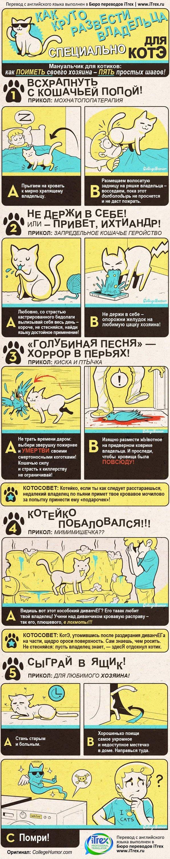 Бюро переводов iTrex. Перевод инфографики: 5 советов для котиков