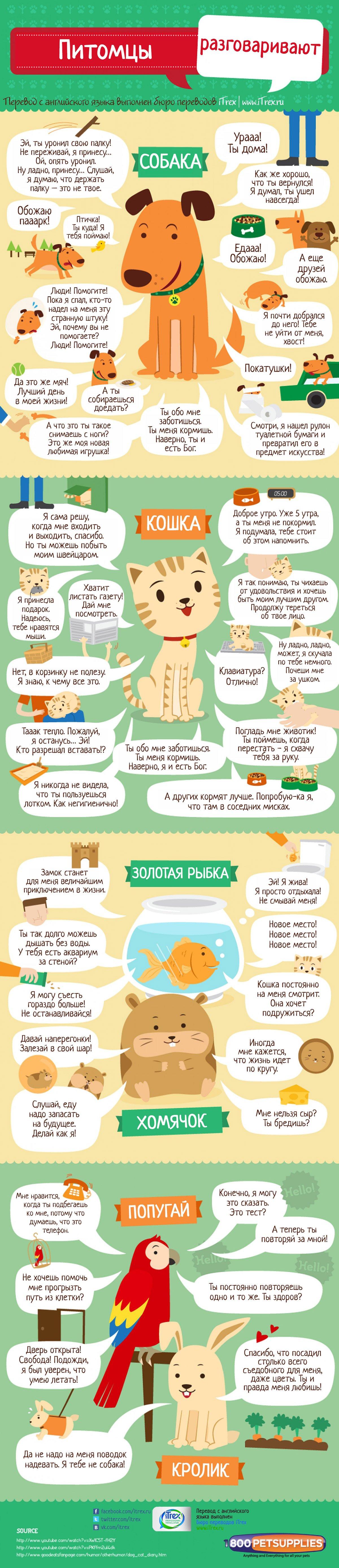 Перевод сделан в Бюро переводов iTrex, Москва: Питомцы разговаривают