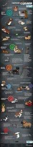 Read more about the article Инфографика: преимущества содержания собаки