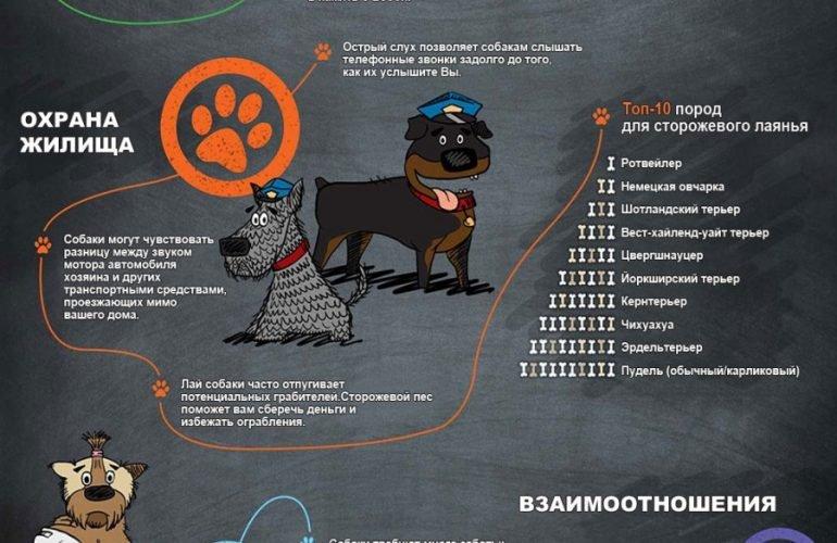 Инфографика: преимущества содержания собаки