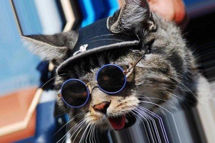 You are currently viewing 5 советов для котиков