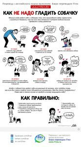 Read more about the article Как не надо гладить собачку?