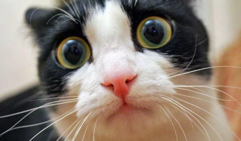 You are currently viewing Кошки. Урок анатомии.