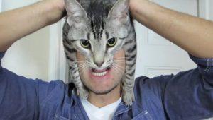 Read more about the article Почему кошки лучше мужчин
