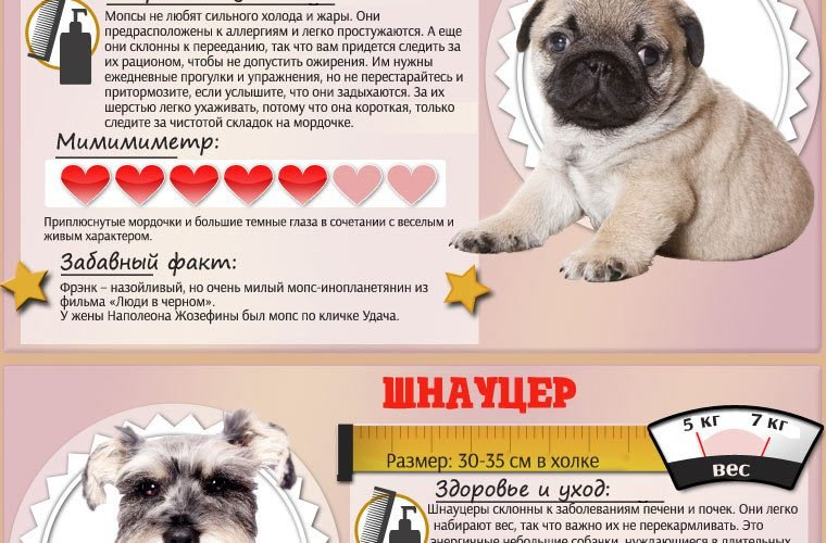 Самые мимишечные породы собак