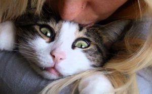 Read more about the article Любители кошек могут стать отличными интернет-маркетологами