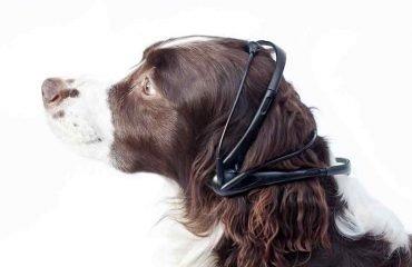 Переводчик с собачьего языка на английский