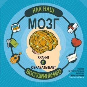 Read more about the article Как наш мозг хранит и обрабатывает воспоминания?