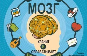 Как наш мозг хранит и обрабатывает воспоминания?