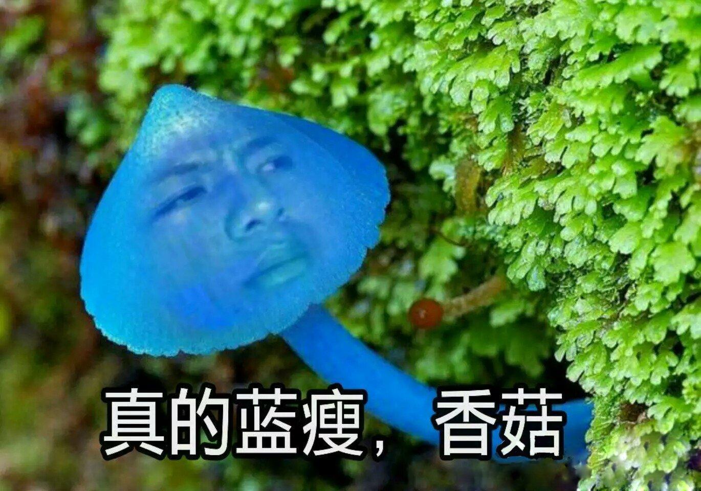 You are currently viewing Синий худой гриб
