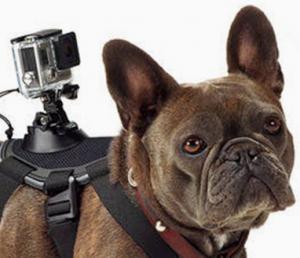 Read more about the article Аутентичный перевод для производителя экшн-камер GoPro