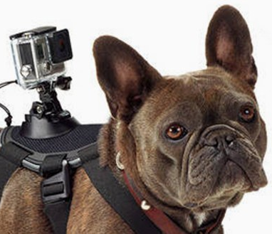 Аутентичный перевод для производителя экшн-камер GoPro