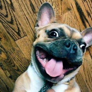 Read more about the article Как собаки читают наши мысли, а мы понимаем собачий язык