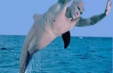 О чем говорят дельфины