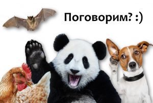 Read more about the article О языке куриц, мышей, панд и других животных