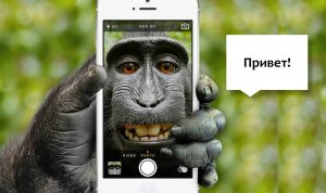Read more about the article О способах коммуникации животных