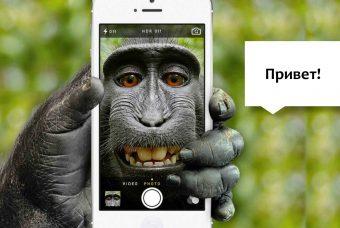О способах коммуникации животных