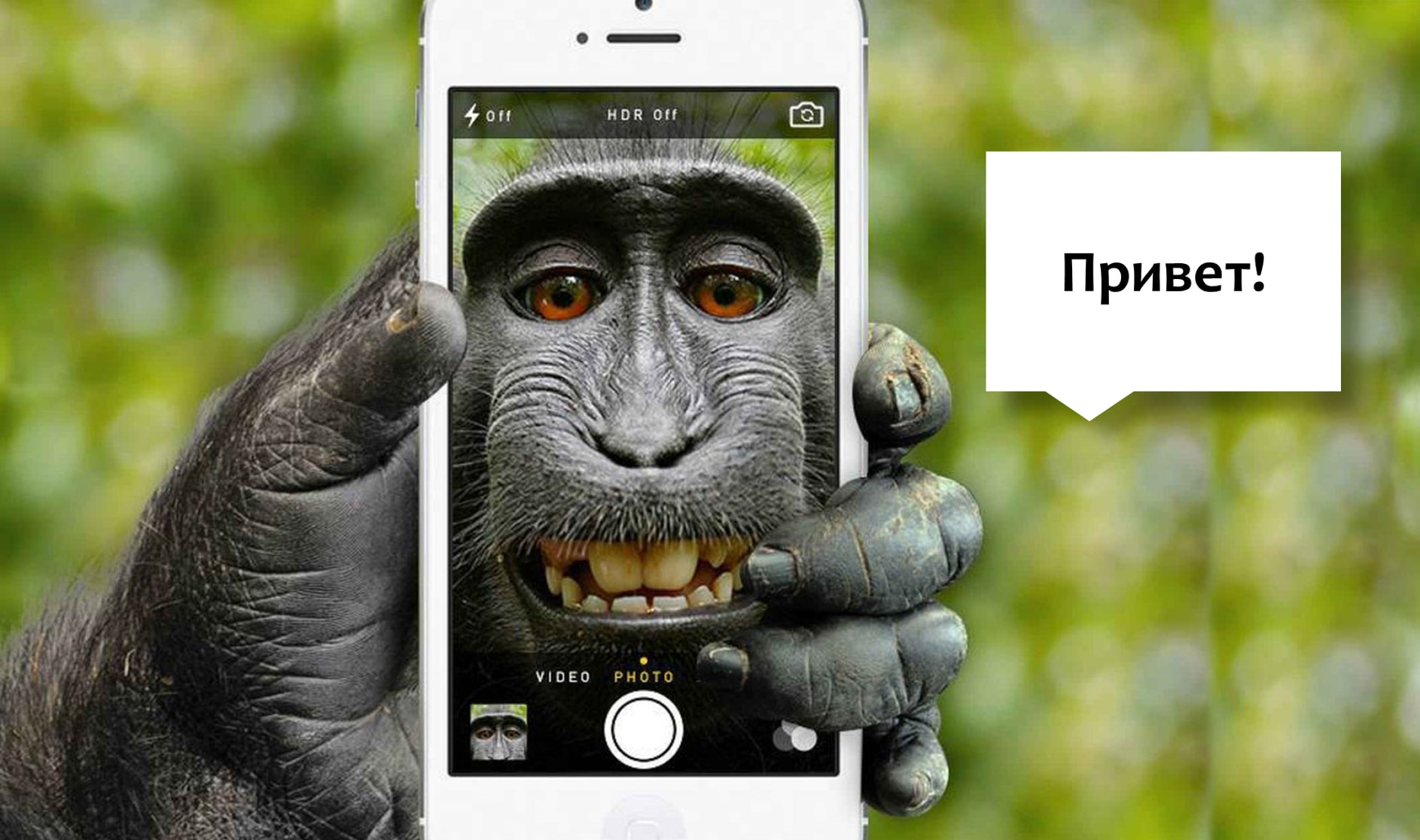 You are currently viewing О способах коммуникации животных