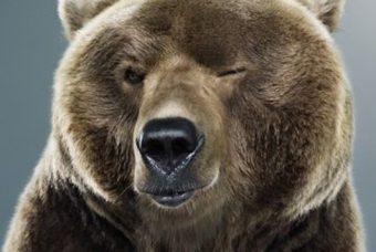 Медвежья мимика